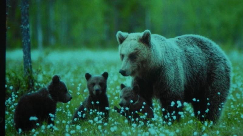 Встреча с фотографом дикой природы К.Г. Шатеневым